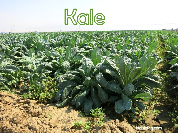 Noble Pig and Cal Organic Kale