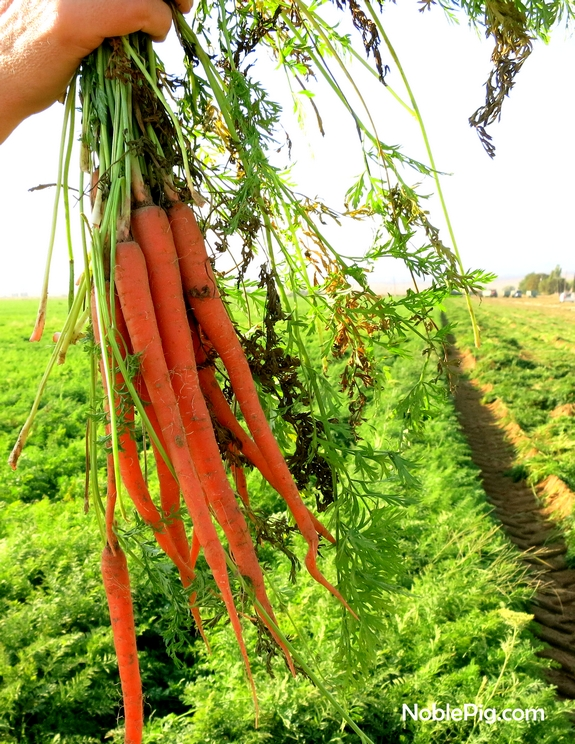 Noble Pig and Grimmway farms Carrots