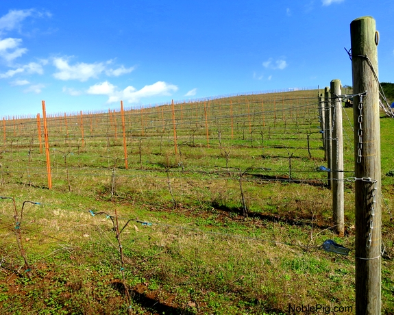 Noble Pig Vineyard