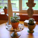Noble-Pig-Succulents1