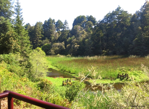 Riding the Skunk Train Ft Bragg the views