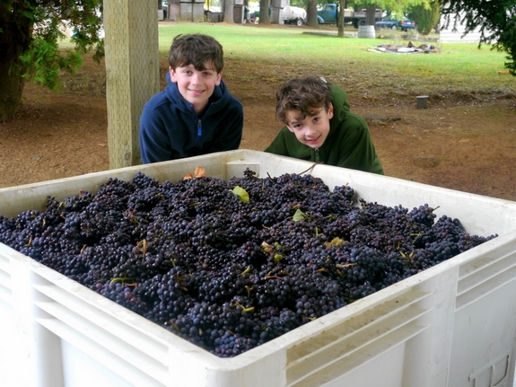 Benjamin Pollak and Jonathan Pollak Noble Pig Winery Harvest