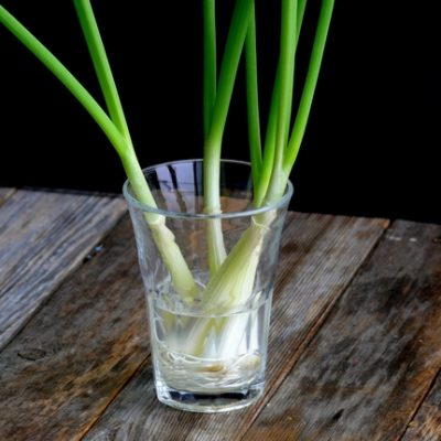 How to Grow Green Onions on Your Windowsill